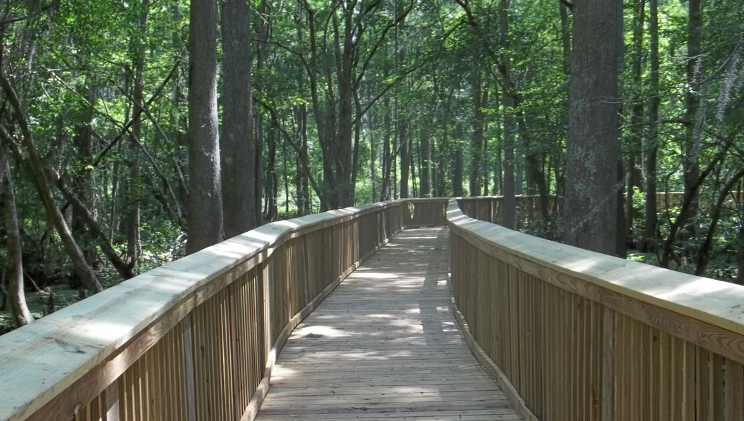 Boardwalk portion of one of the trails